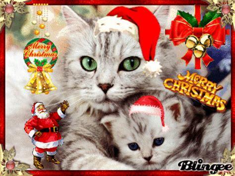 imagenes navidad gatitos gatitos navide 241 os fotograf 237 a 76447322 blingee com