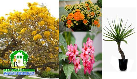 tanaman hias murah  kota bandung jasa taman bandung