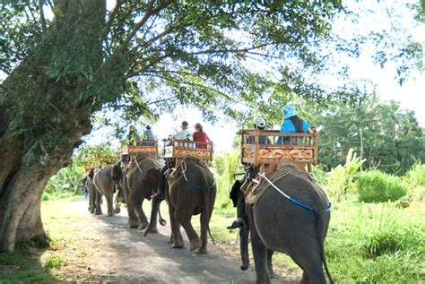 bali elephant ride tour bali elephant ride and ubud tour bali surf advisor