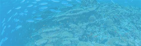 reef oasis dive club dive center sharm el shiekh padi 5 idc reef oasis
