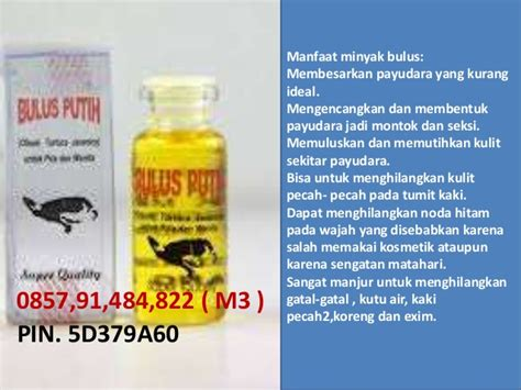 Minyak Bulus Payudara penggunaan minyak bulus untuk payudara pemakaian minyak