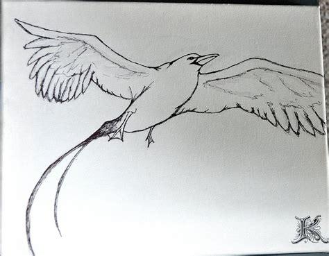 how to draw sea birds how to draw sea birds
