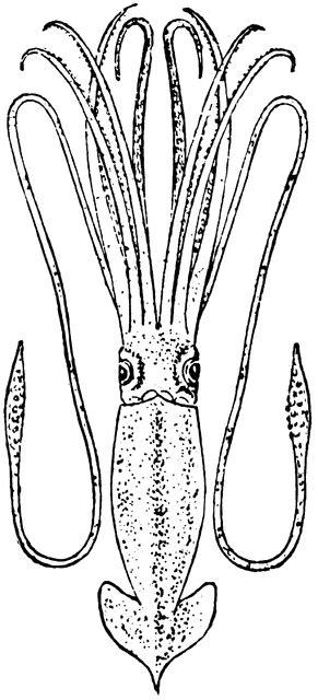 giant squid clipart