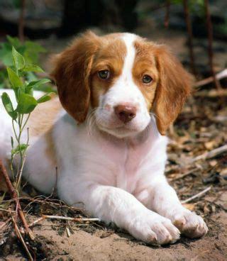 medium sized puppies best 25 medium size dogs ideas on medium sized dogs breeds best medium