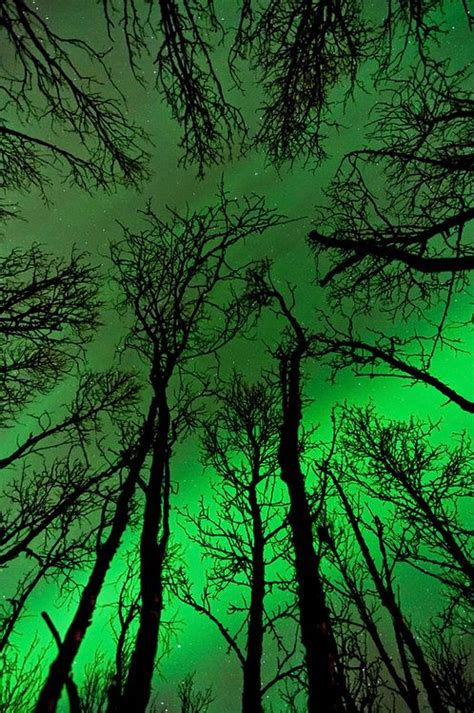 northern lights trees trees and northern lights green northern