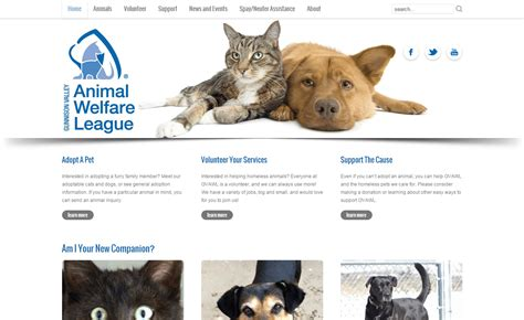 pattern auf website 30 beautiful pet adoption websites kittens cute wallpapers