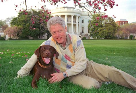 presidential dogs bill clinton s buddy presidential pet museum