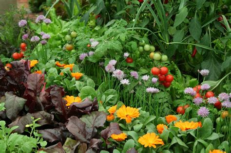 Best Flowers For Vegetable Garden Companion Planting How To Deter Pests And Encourage