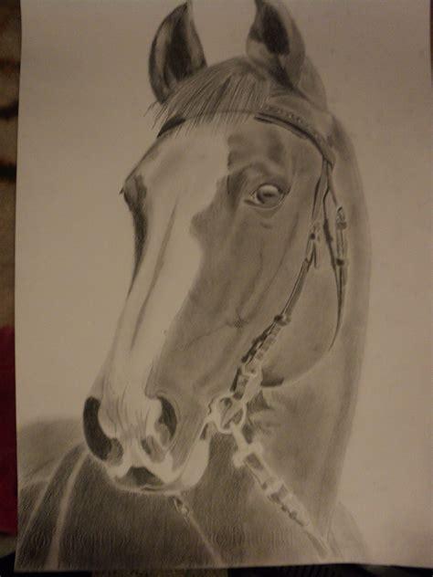 caballo a lapiz dibujos de animales caballo lapiz dibujos animales ajilbabcom portal tattoo