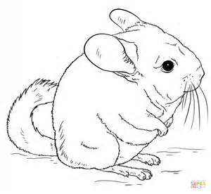 short tailed chinchilla clipart clipground