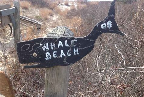 boat rentals near strathmere nj about whale creek marina