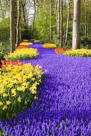 Keukenhof Holland World S Largest Flower Garden Largest Flower Garden In The World