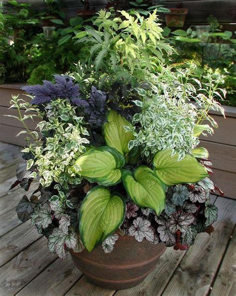 specialty gardening foliage arrangements