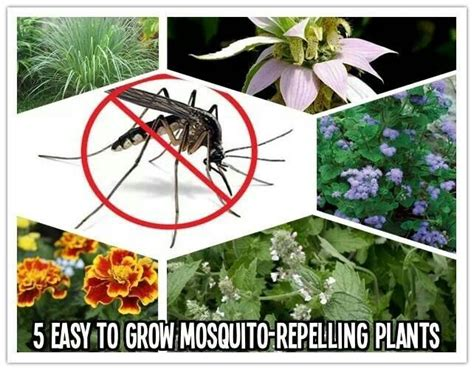 10 best images about weed and bug killers on pinterest the bug natural and mosquitoes