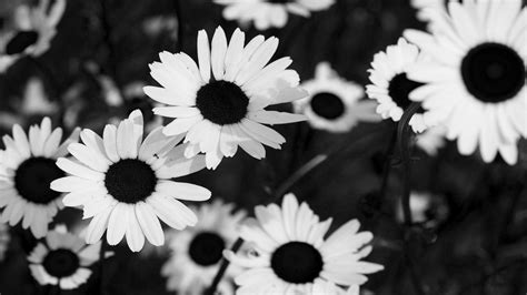 black and white vintage flowers black and white