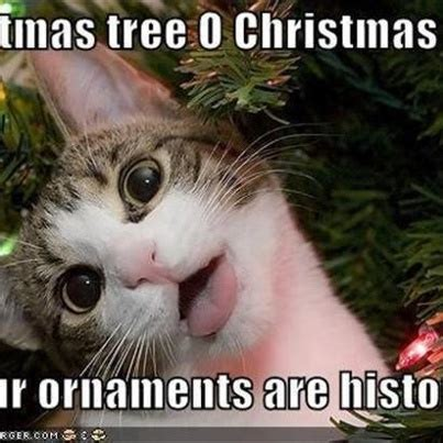 Cat Christmas Tree Meme - xmas cat song animals pinterest