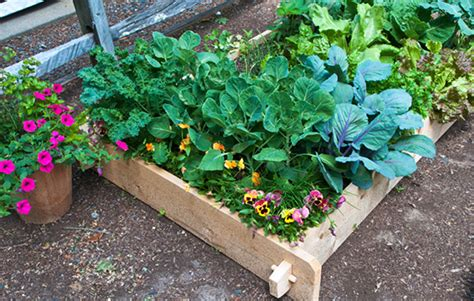 6 Expert Tips To Prepare A Perfect Garden Bed For Preparing A Vegetable Garden Bed