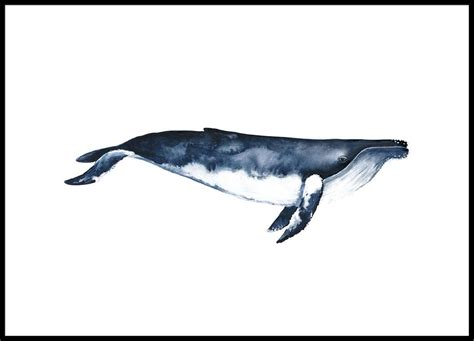 Country Blue Kitchen by Humpback Whale Poster