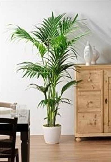 piante da interno sempreverdi piante da terrazzo sempreverdi piante da terrazzo