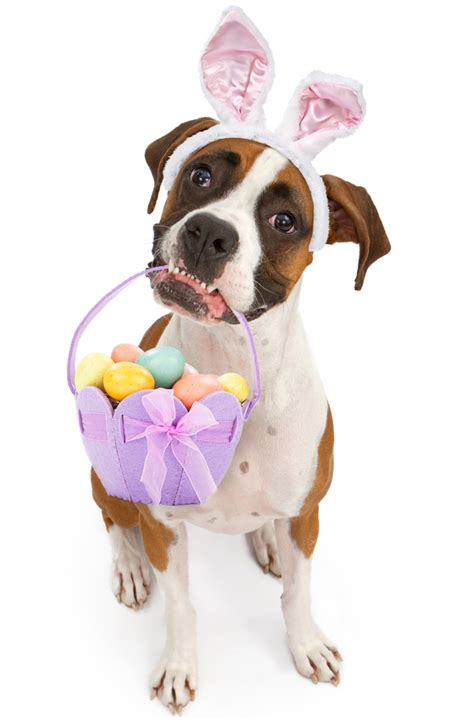 easter puppy 25 easter pictures to make you smile dogtime
