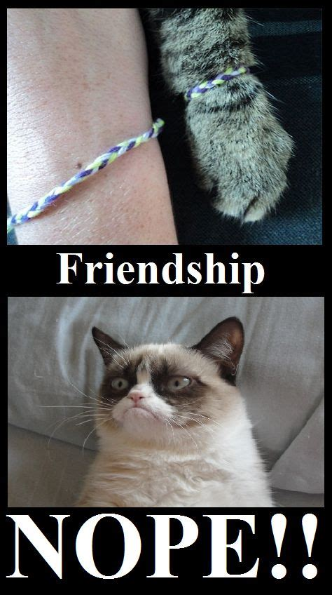 Memes Friendship - grumpy cat friendship meme cute animals pinterest