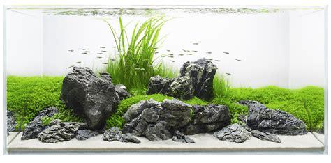simple aquascape designs live planted