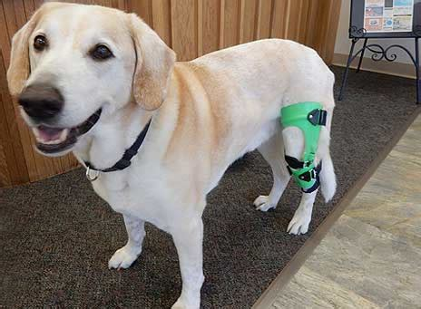 dogs back legs not working knee brace leg braces for dogs canine knee braces acl brace for dogs