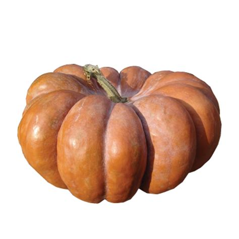types of pumpkins heb pumpkin guide