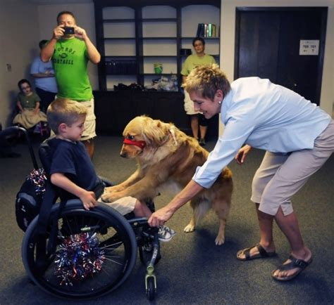 golden retriever service dogs 10 service dogs photos proves dogs are better companions doglers