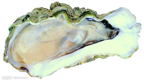 Oyster Shell by