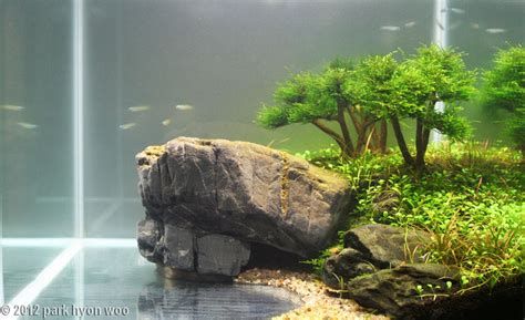 Aquascaping With Rocks by
