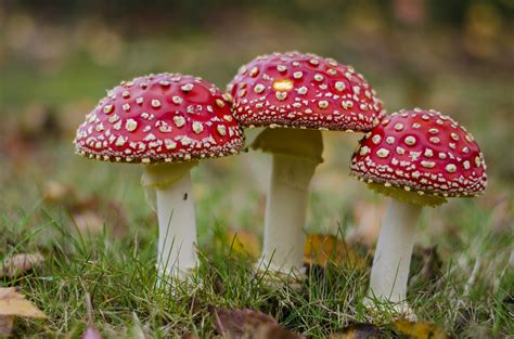 mush room mushrooms nature s recyclers and pollution zappers the green optimistic