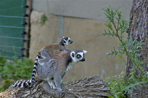 viale giardino zoologico zoo a un ora da roma