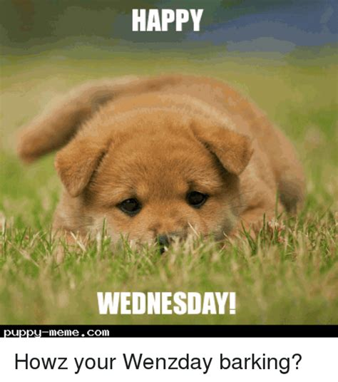 Happy Wednesday Meme - 25 best memes about puppies memes puppies memes