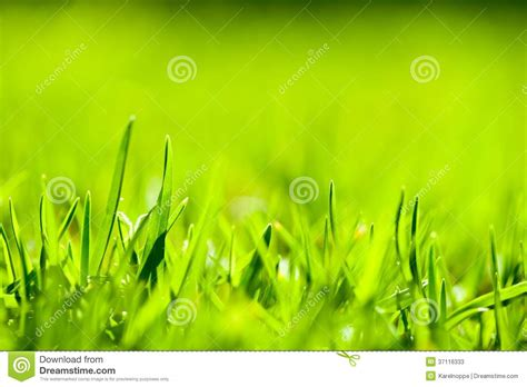 white lotus day spa point up of green grass with focus point stock photos