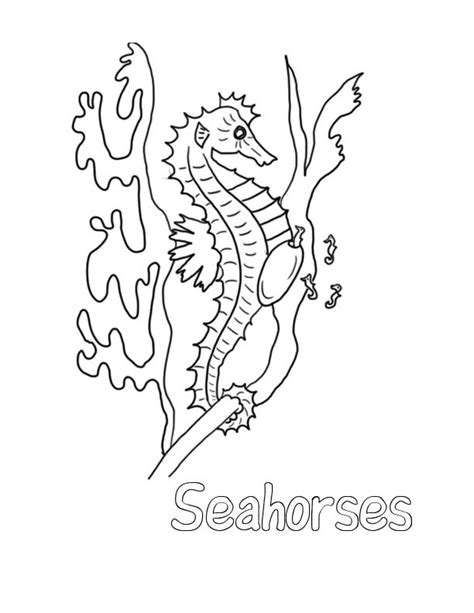 free printable coloring pages seahorses free printable seahorse coloring pages for kids