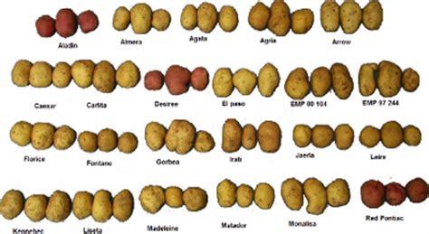 bleigießen wann aardappelen geschiedenis