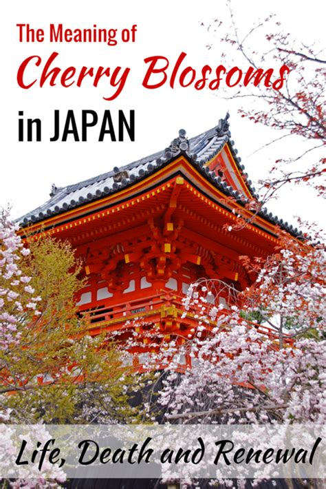 new year cherry blossom meaning the meaning of cherry blossoms in japan and