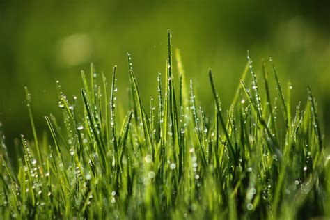 Green Grass green grass wallpaper nature green grass field dew