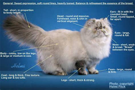 Sho Kutu Kucing Malaysia kalau macam ni harga tak kurang dari rm6k
