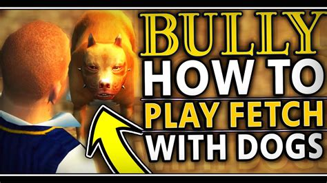 how to to play fetch bully how to play fetch with dogs new feature sorta bravecto flea