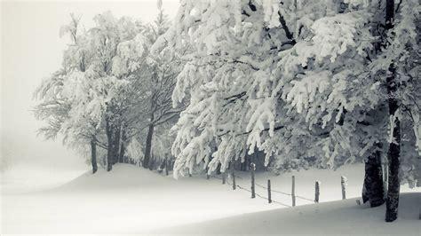 tree in snow wallpaper snowy trees wallpaper 11605