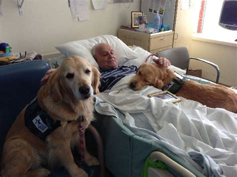 hospital dogs puppycam shows service for disabled veterans