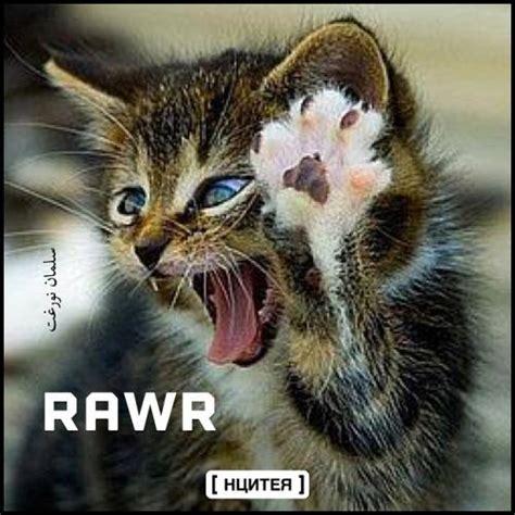 Rawr Meme - rawr cat www imgkid com the image kid has it