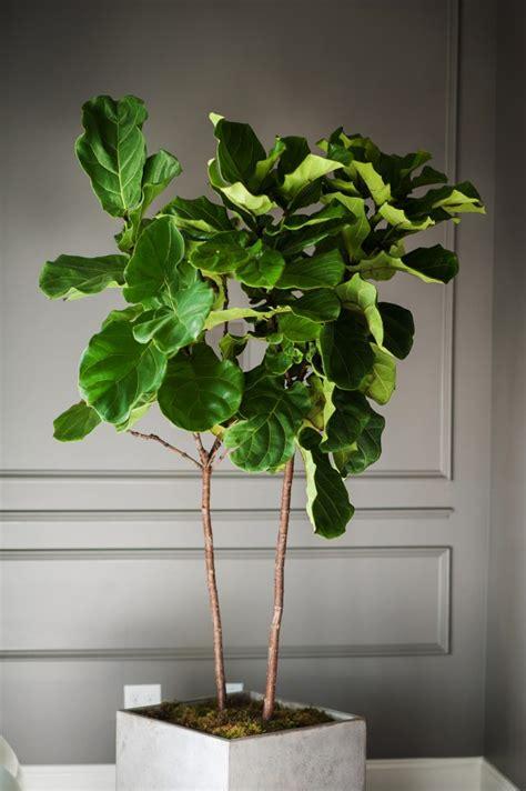 top  indoor plants    care