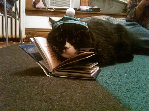 cat picture book 10 great pictures of cats and books interesting literature