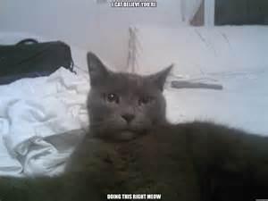 Surprised Cat Meme - surprised cat