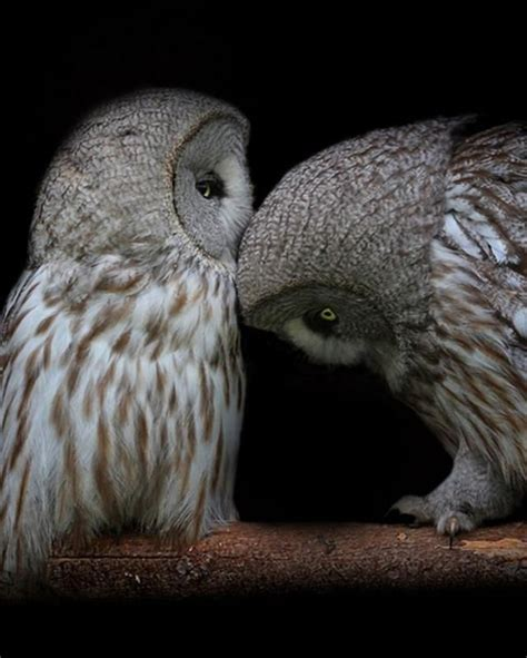 owl lovers pin owl love on pinterest