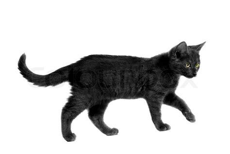Caterpillar Ct11248 Free Box Yellow Black black cat with yellow walking on white stock photo colourbox