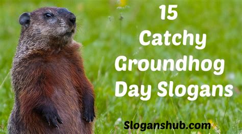 groundhog day morning 30 catchy groundhog s day slogans and sayings